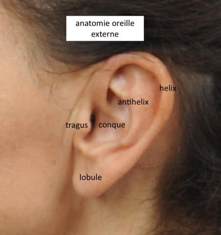 oreille earfold paris logo earfold chirurgie esthetique paris earfold chirurgien esthetique paris dr federico loreto